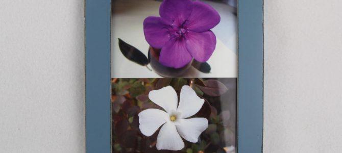 Symmetrien in der aufgewachten Natur – Blüten und Blätter